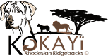 Kokayi Rhodesian Ridgeback