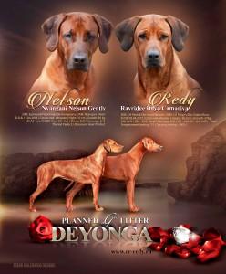 Matings Nelson - Deyonga